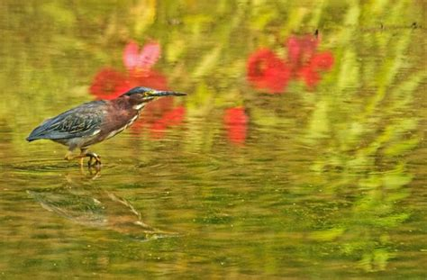 peace valley boat rental green heron picture of peace valley park new britain