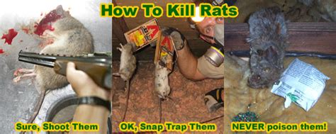 what to do if your eats rat poison how to kill a rat in your house instantly and humanely