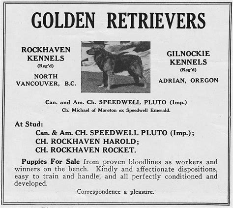 golden retriever club of bc canadian history golden retriever club of canada
