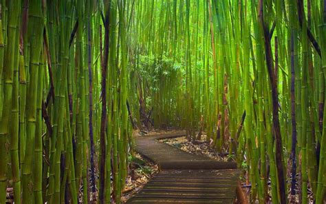 imagenes wallpaper bamboo nature bamboo forest wallpaper iphone wallpaper