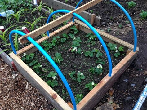 Vegetable Garden Netting Frame Mini Polytunnel Allotment Netting To Protect