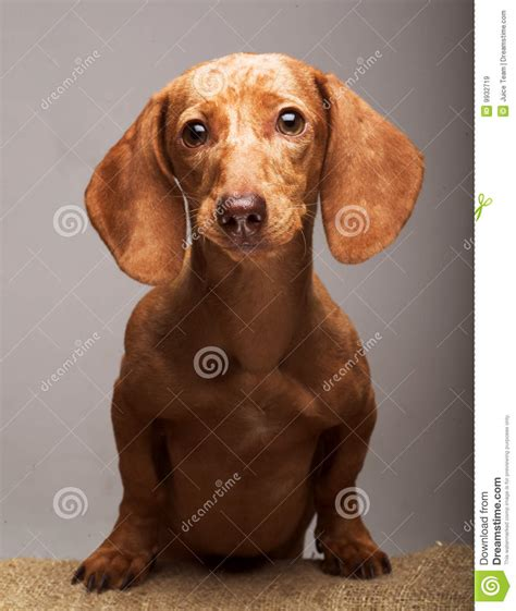 puppy rate puppy rate royalty free stock images image 9932719