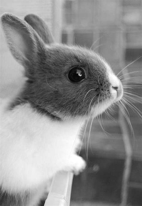black and white rabbit wallpaper black black and white bunny cute image 780240 on
