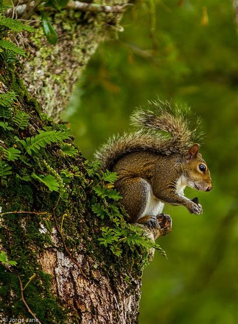 let me see you do the squirrel 449 best images about ba nutty squirrels chipmunk s