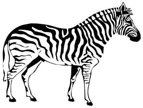 Zebra Outline Picture by Free Illustration Silhouette Drawing Outline Zebra Free Image On Pixabay 971334