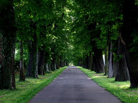 images nature forest grass road lawn sunlight