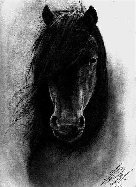 Black Horse - Type Animals