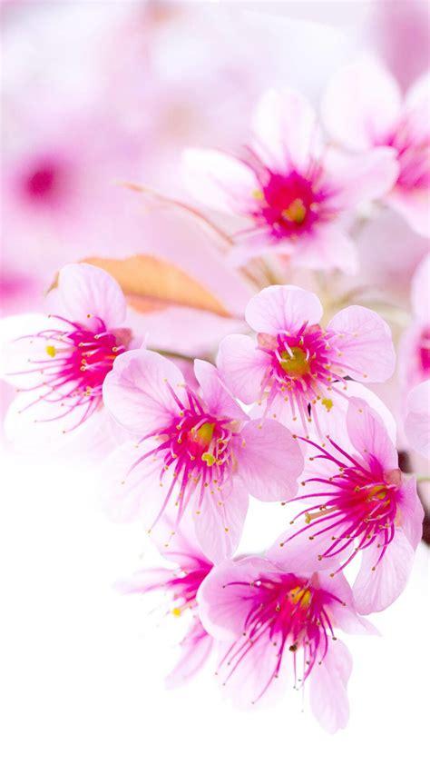 hübsche gärten die 90 besten blumen hintergrundbilder f 252 r iphone