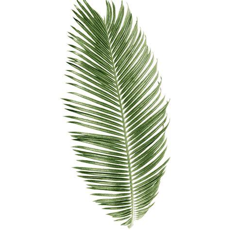 Leaf Print palm botanical leaf print watercolour by georgie st clair
