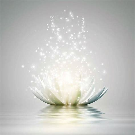 water flower bloom water sparkle lotus flower water magic daily muse
