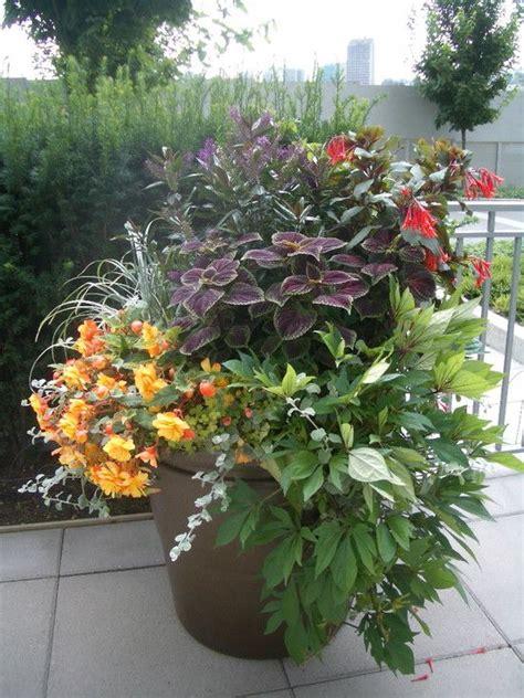 tropical landscape design pots  yards gardens