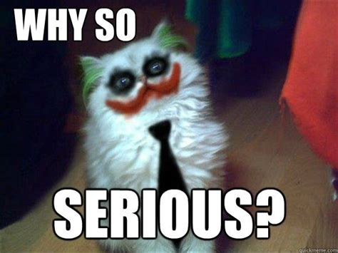 Seriously Meme - why so serious cat edition