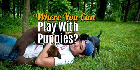 where can i play with puppies smart family pets pets care dogs food etc part 2