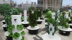Bell Book And Candle Restaurant Rooftop Garden by Image Detail For Blue Cheese Nation Aeroponic Systems