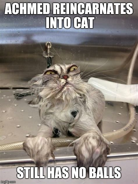 Angry Cat Meme No - angry wet cat imgflip