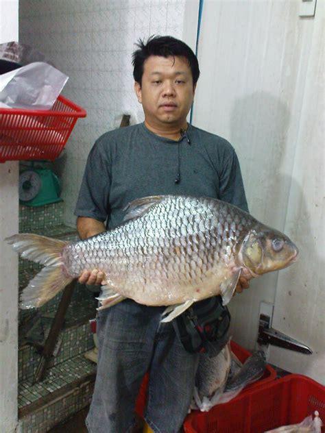 river fish supplier peters fish trading  sarawak tengalan sarawak mungalan puntius bulu