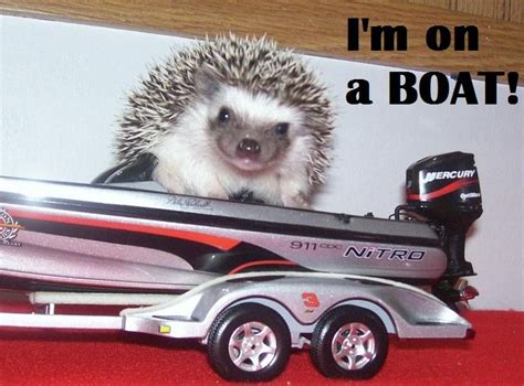 on a boat with my flippy floppies i got my swim trunks and my flippy floppies hedgehogs