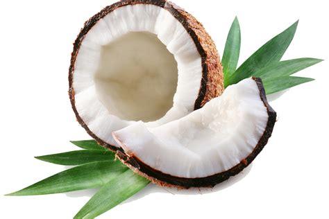 kokosnuss le coconut png transparent images png all