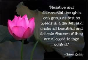 Quotes About Lotus Flowers Lotus Quotes Quotesgram