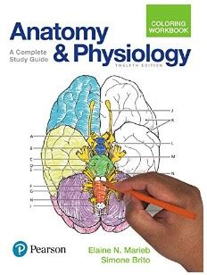 anatomy and physiology coloring book best anatomy coloring book 2018 for school