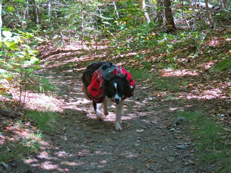 hiking dogs wordless wednesday rescue hiking realistic cooking ideas