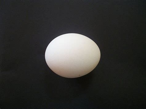 egg isolated chicken  photo  pixabay