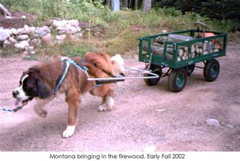 how to a to pull a cart working german shepherd dogs cart wagon dogs