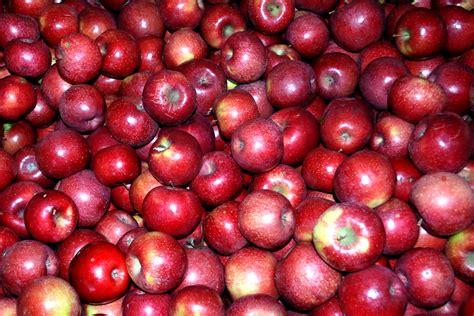 apple red edupic virginia social studies page
