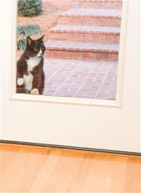 Exterior Cat Door Doors Petsafe Pet Doors For Dogs Cats