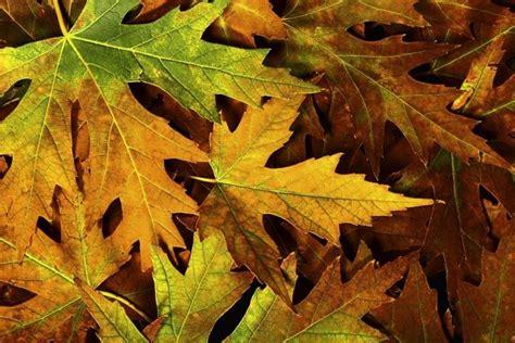 62 wallpaper autumn macbook air fall desktop wallpapers backgrounds 183