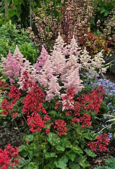 pin by mike wilczynski on deer resistant plants pinterest deer proof flowerbed snapdragon delphinium peony