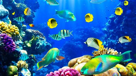 underwater hd wallpaper 1920x1080 underwater wallpapers 64 pictures