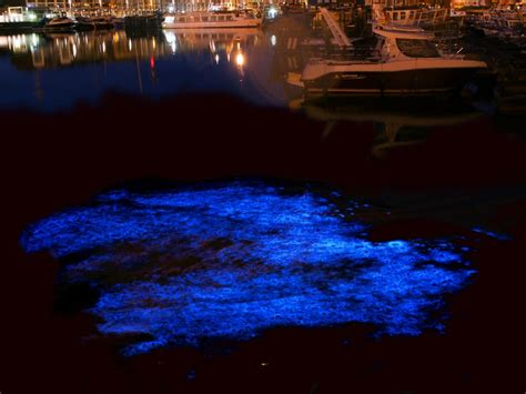 glow in the paint hong kong pollution sparks beautiful blue plankton glow in hong kong