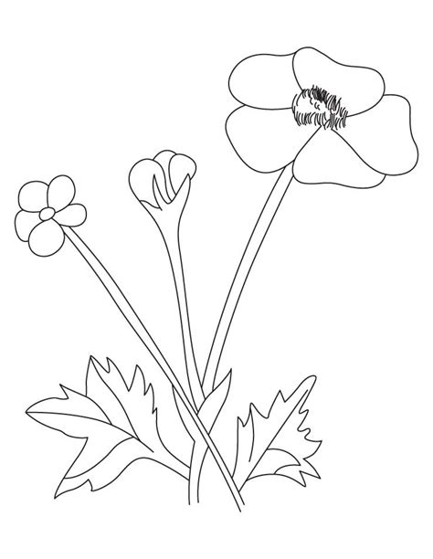 buttercup free coloring pages