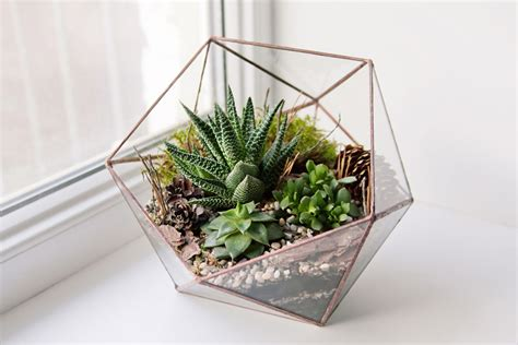 how to create a terrarium wagers greenhouses