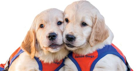 Dogs On by Guide Dogs Qld With Andrew Barnes