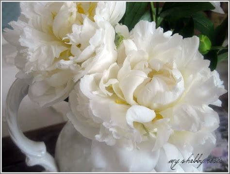 patina the smell of peonies