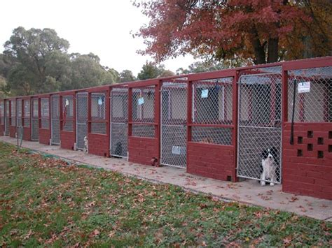 dog house boarding the kennels alpha boarding kennels