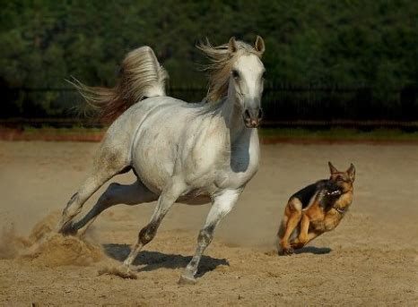 puppies and horses and pony act modern magazine