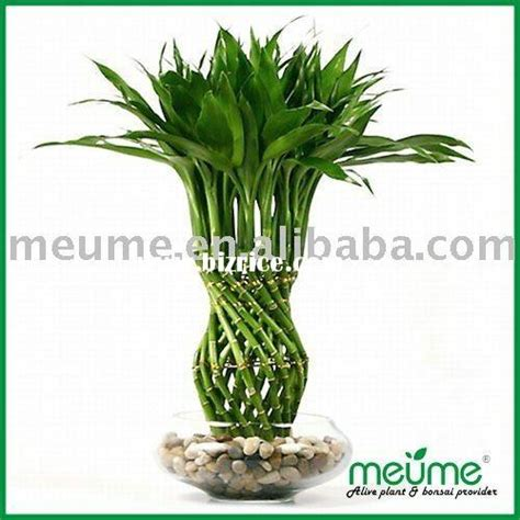 desk plant maintenance helpful tips to care for plants lucky bamboo indoor house plant garden plants herbs tips