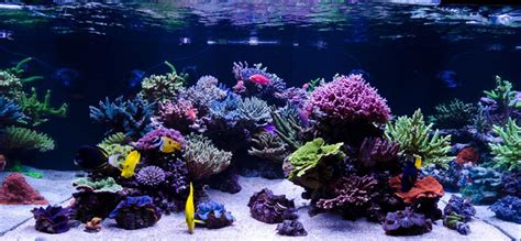 Home Decoration Articles by Reefkeeping Magazine February 2014 Tank Of The Month