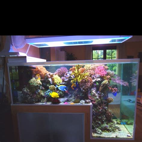 shelf drop tank reef stuff shelves