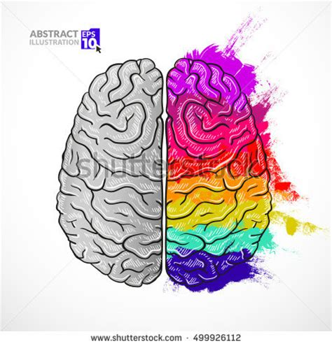 brain color left right hemisphere human brain stock vector 375129304