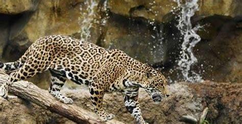 Mesker Park Zoo Botanic Garden Evansville In Top Mesker Park Zoo Botanic Garden