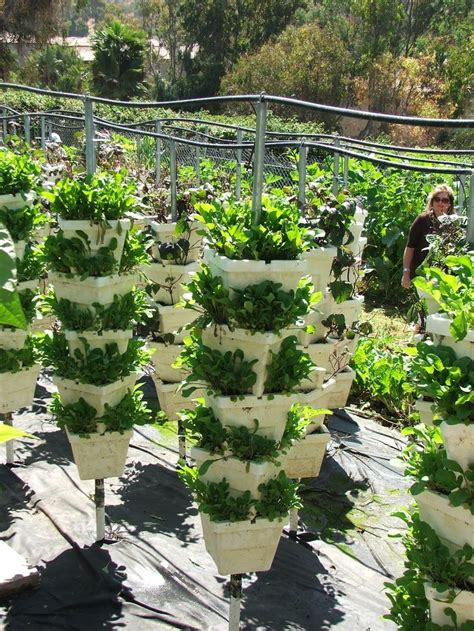 strawberry vertical garden 17 best images about aquaponics on gardens