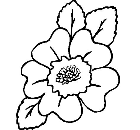 narcissus flower coloring page narcissus flower drawing clipart best