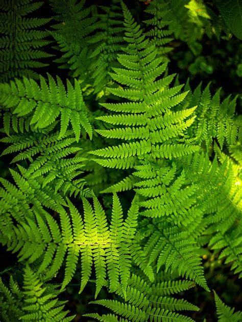 schattige zimmerpflanzen zimmerpflanzen f 252 r schattige pl 228 tze zimmerpflanzen f r