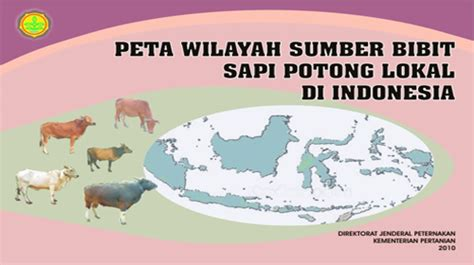 Bibit Sapi Di Bali sumber bibit sapi potong lokal di indonesia