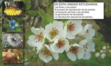 imagenes de flores que se reproducen asexualmente clari 243 n pizarra digital