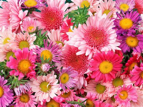 wallpaper nature flower pictures flowers planets wallpapers flowers nature